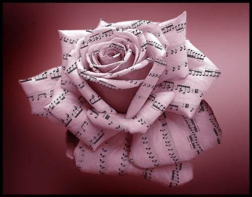 rose blanche et notes de musique